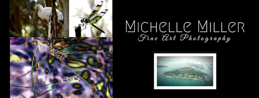 A collage of photographs by the Artist Michelle Miller