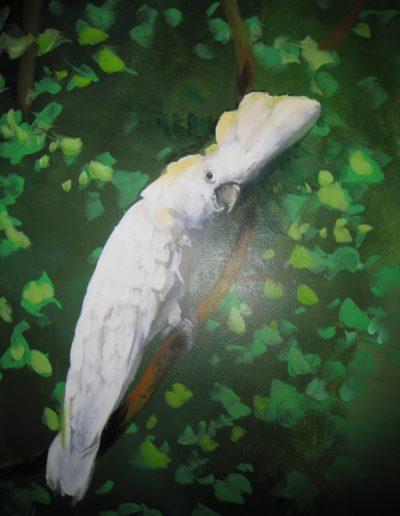 White Cacatoo Nature Birds